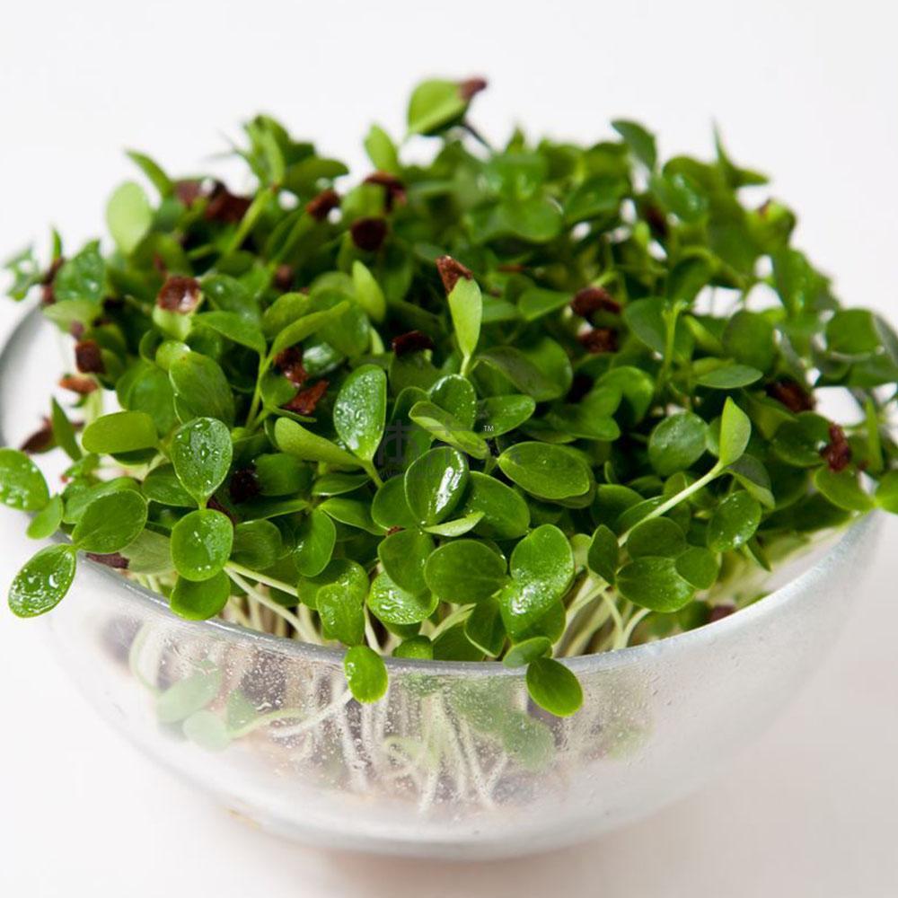 将香椿树种放在温暖潮湿的环境里,使其自然发芽,从而成为香椿苗。与香椿芽相比,香椿苗具有更为浓郁的香味、更好的口感,重要的是能一年四季都能享用。 芽苗菜俗称芽菜、活体蔬菜,一般是指用植物种子在一定条件下培育出可供食用的嫩芽、芽苗类蔬菜。 优质芽苗菜口感清香脆嫩,风味独特,具有很高的营养价值和食用价值,经常食用可以起到抗疲劳、抗衰老、减肥美容的保健作用。 储存方式:如果需要长期保存,可以用开水略烫一下,用细盐搓一搓,装在小塑料袋内入冰箱冷冻室内,随取随用,终年可食。
