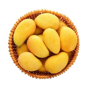 海南小台农芒果 约1kg 外形小巧喜人,果色鹅黄悦目